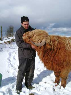 Cuddling a Highland Bull in the snow